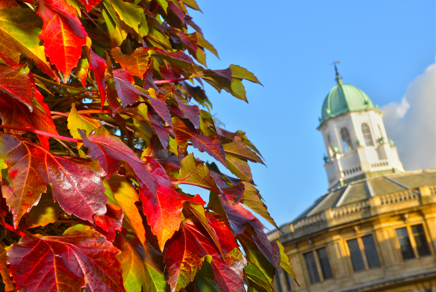 Autumn framing the cupola of the Sheldonian Theatre